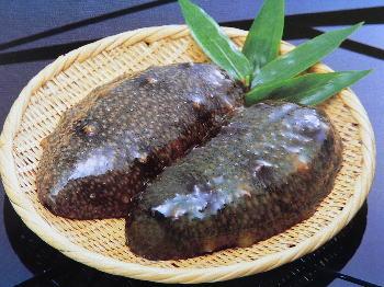 大村湾のなまこ namako ナマコ 海鼠