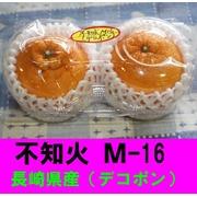 九州 長崎県産 不知火M-16 (デコポン)2個入り 直売所で大人気!産地直送!