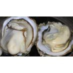 大村湾の牡蠣
