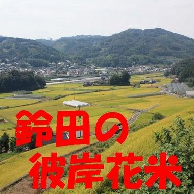 彼岸花 新米 長崎県産
