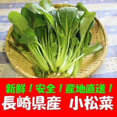 長崎県産 小松菜