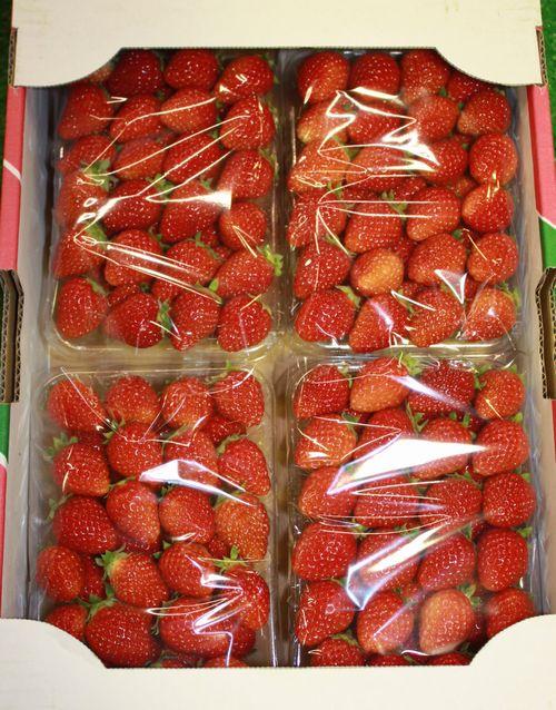 苺 4パックセット イチゴ