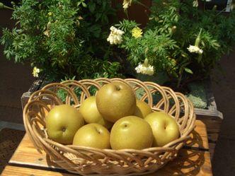 豊水なし 梨