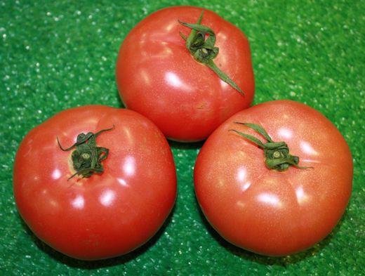 秋津さんのトマト